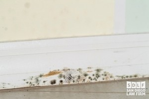 Mold Injury Claims in California